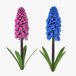 jacinto-uva flower 3D model