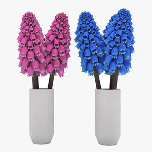 jacinto-uva flower 3D