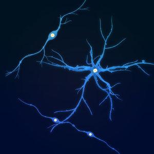 neuron anatomy science 3D