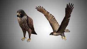 falcon bird 3D model