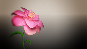 3D flower blooming animation model
