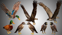 Realistic High Detailed Low Poly Elite Bird Collection