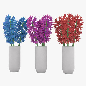 flower hyacinth 3D model