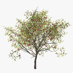 cherry laurel fruity 3D model