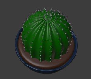 3D plant cactus succulent