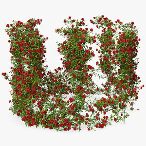 red rose bush 3D model