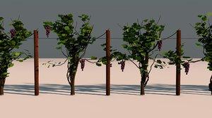 grape vines vineyard plant model