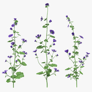 wild malva sylvestris set 3D model