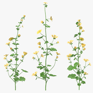 wild yellow malva set 3D
