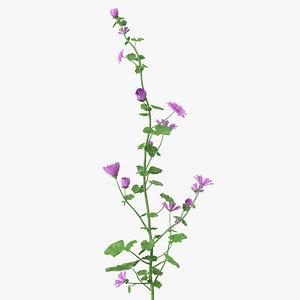 3D malva plant model