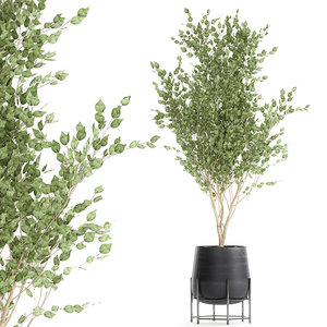 decorative trees interior black 3D model