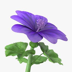 malva sylvestris flower 3D