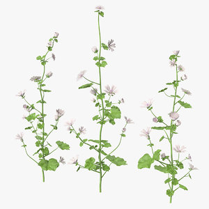 wild mallow plants set 3D model