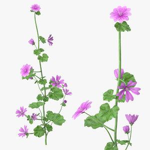 mallow plant 3D