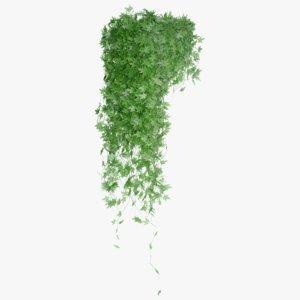 vine plant nature 3D