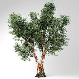 red gum tree model