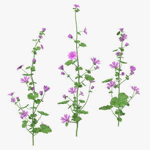 common mallow plants set 3D