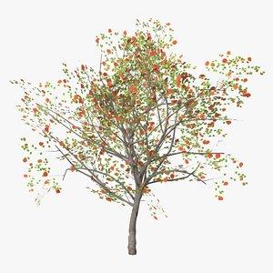 3D apricot fruity model