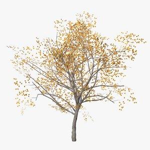apricot autumn 3D