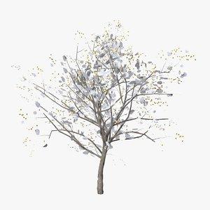 apricot winter 3D model