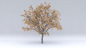 apricot autumn hight 3D model