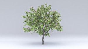 3D apricot flowers hight model