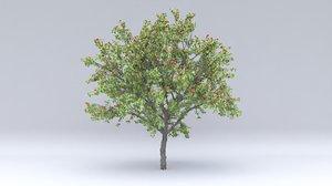 apricot hight fruity 3D model