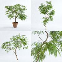 Everfresh Trees - Cojoba arborea var. angustifolia