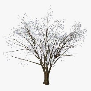 3D almond winter