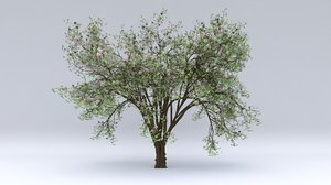 3D almond flowers hight