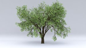 almond hight fruits 3D