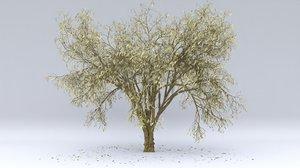 almond autumn hight 3D