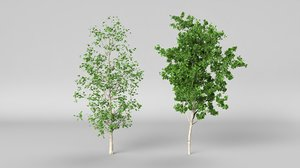 3D betula summer hight