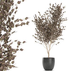 decorative trees interior black 3D model