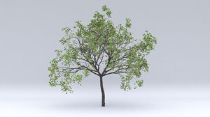 3D plum hight fruits model