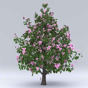 3D magnolia summer hight model