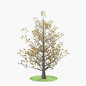 magnolia autumn 3D model