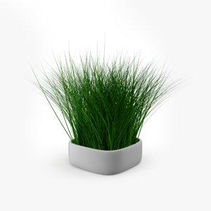 3D grass plant