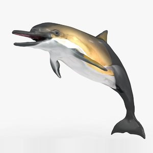 3D dolphin l928