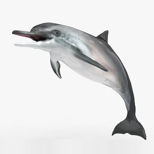 3D dolphin l927 animate
