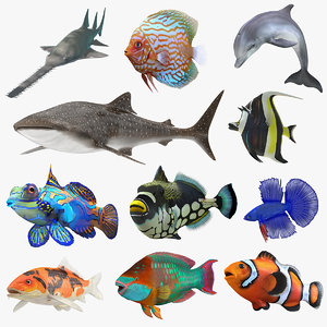 3D model fishes 5