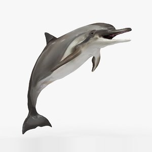 3D dolphin l930 model