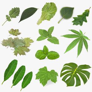leaves 8 3D model