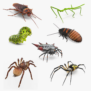 rigged creeping insects 3D