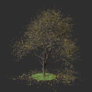 3D olea autumn hight model