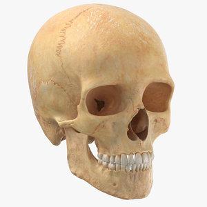3D model real human male skull