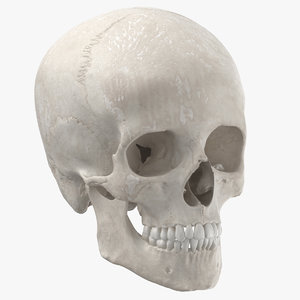 real human woman skull 3D model