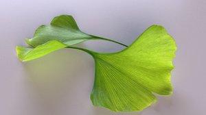 leaves trees plant leaf 3D
