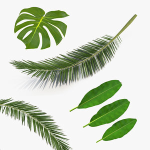 tropical leafs 3D model