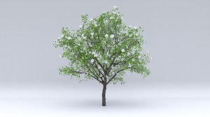 3D pear flowers hight model